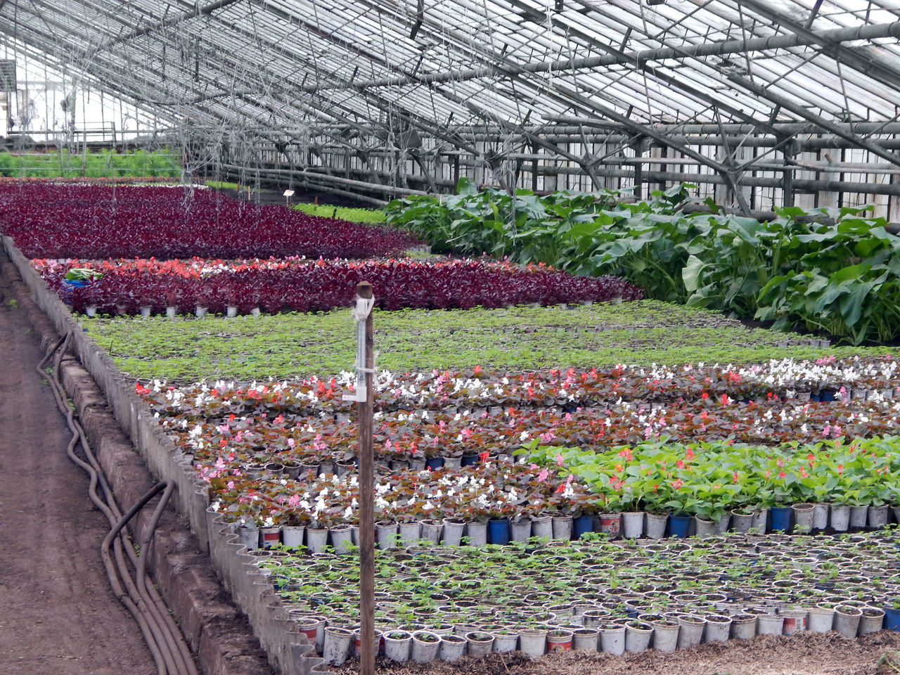 Участок зеленого хозяйства «Рыщицы» 8